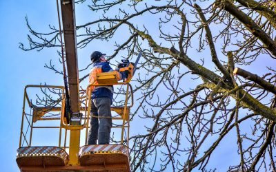 2 Tree Pruning Techniques: Which is Better?
