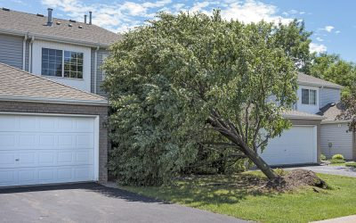 Nationwide: Emergency Tree Service You Can Depend On