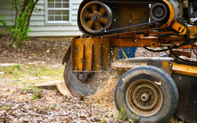 Our Stump Removal Process