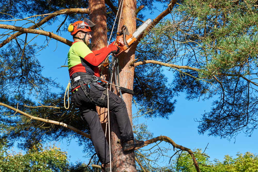Call A Professional! Don't Cut Down Your Own Tree