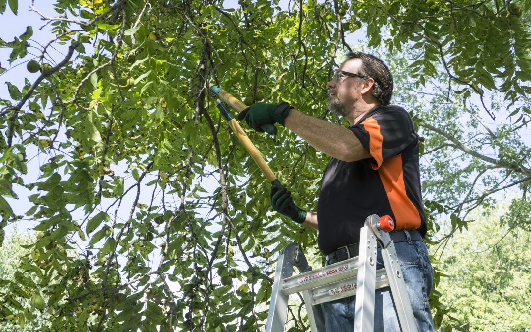 Why Tree Trimming is Important to the Growth of your Tree
