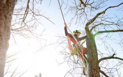 Why Should You Hire an Arborist?