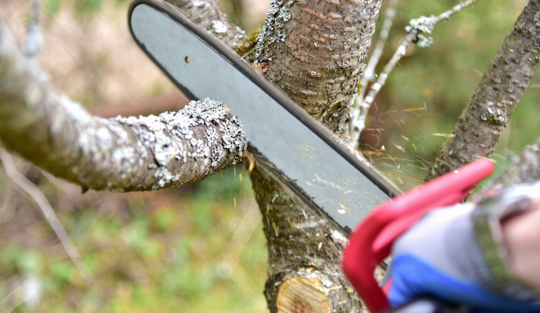 When Is the Best Time of Year to Trim and Prune Trees?